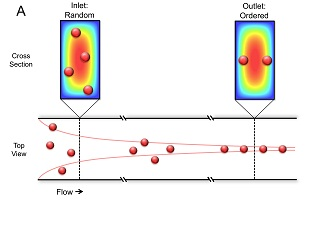 Effects of inertial focusing on particles in a straight channel